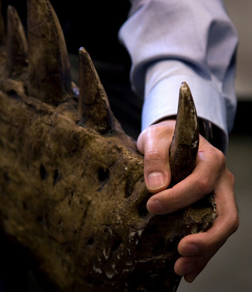 the hand of a paleobiologist.