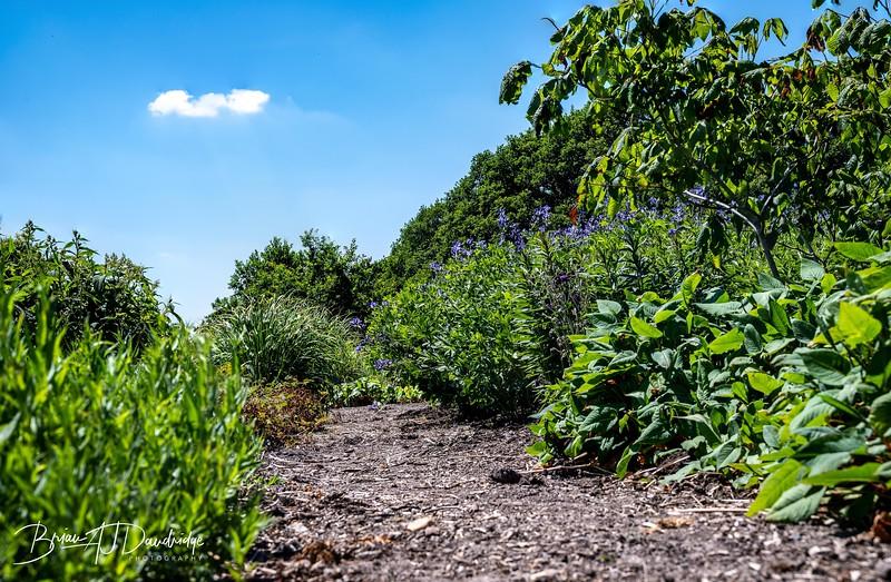 Sussex Prairie Gardens Z6-3699-Edit.jpg