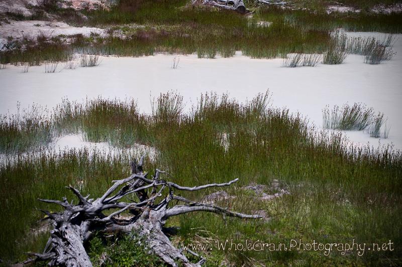 20100712_Yellowstone_2931.jpg