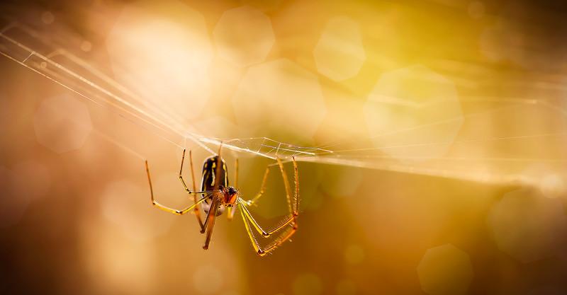 Bugs and Beetles - 2.jpg