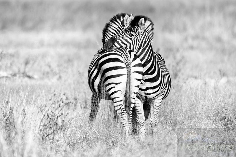 Botswana-20110715-2451-Edit-2-Edit.jpg
