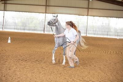 Horse 497