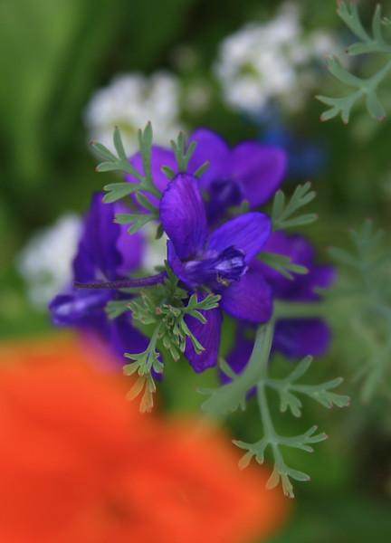 IMG_4191Blue Flower.jpg