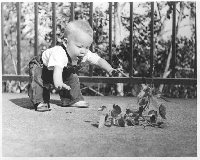 "Description of . SHERMAN W. SCHULTZ of St. Paul: ""I very recently came across this family treasure, featuring my son David, at 18 months, getting a lesson in gravity physics. It was totally unposed; I was just fast with my old Argus C-3 35-mm camera. I processed and printed the photo in my own darkroom.