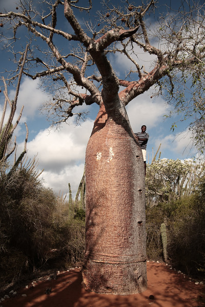 Pro climber of Baobab!