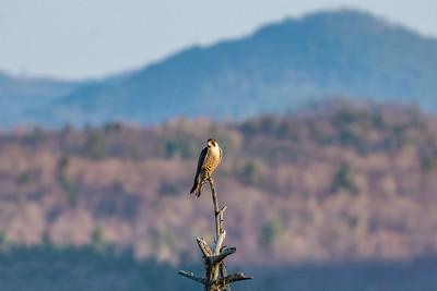 Video: New Adirondack Wilderness Preserve