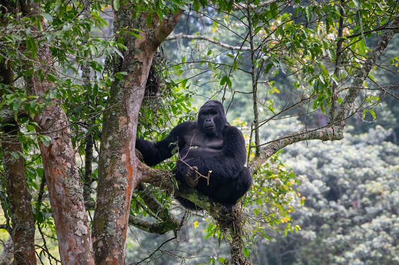 Uganda_T_Gor-1571.jpg