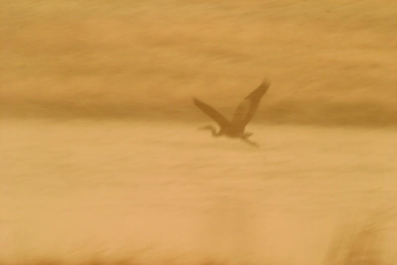 GBH Fly Yellowstone 578_7825.jpg