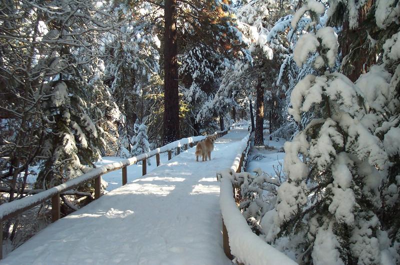 BBR-view-golden-retriever-paulina-springs-boardwalk-snow-KateThomasKeownKTK.jpg