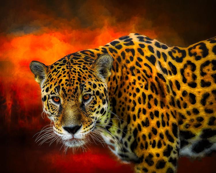 jaguar-3370498_1920-copy.jpg