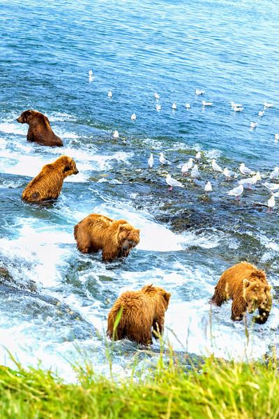 Alaska_2013_IG3A9483.jpg