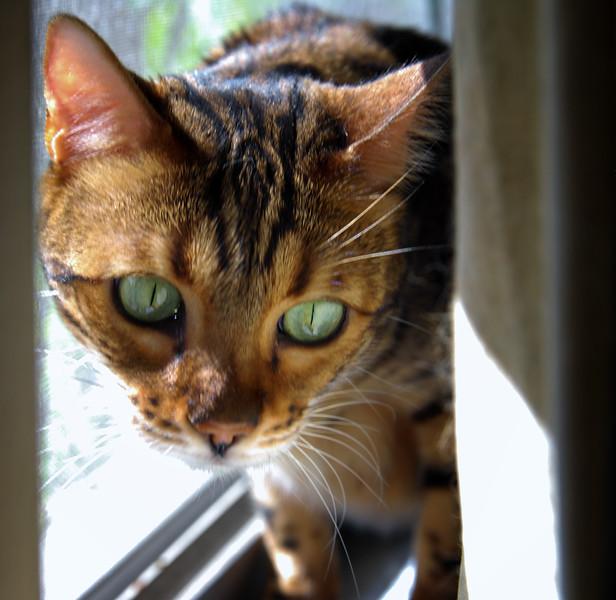 Mia peering.jpg