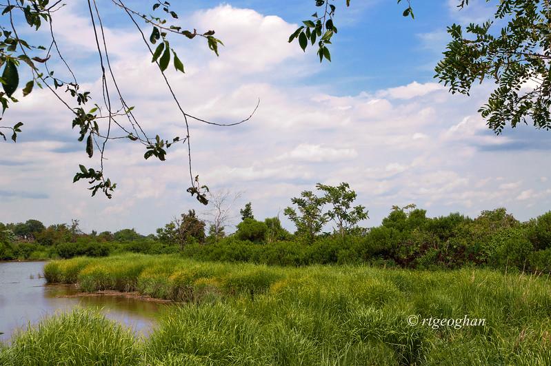 July 11_Mill Creek Marsh_0491.jpg