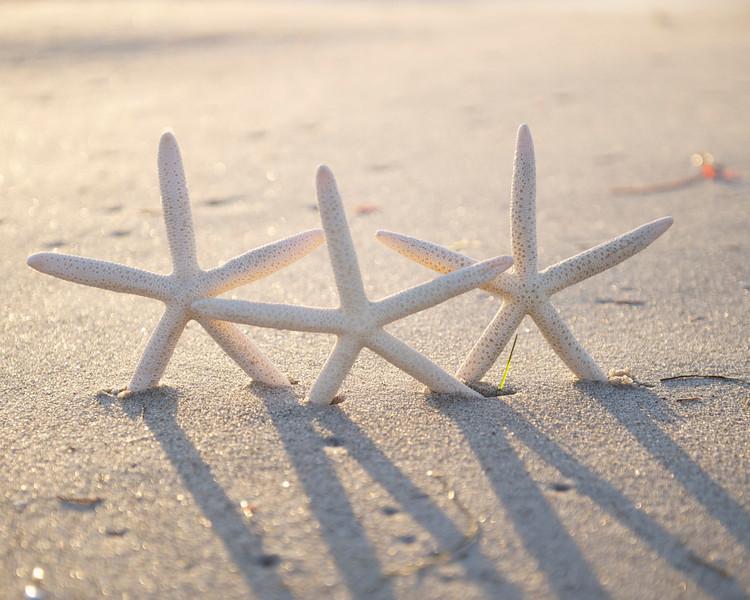 StarFish on La Jolla Beach