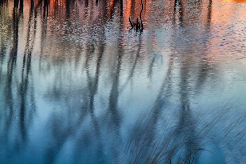 REFLECTIONS_7892.jpg