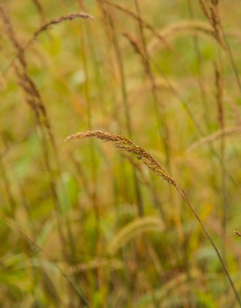 Prairie  46