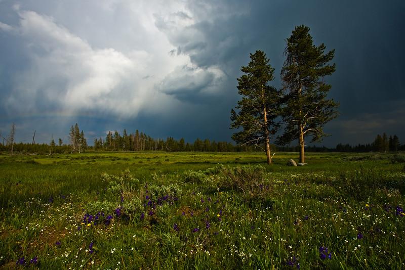 Evening Storm - Varina Patel