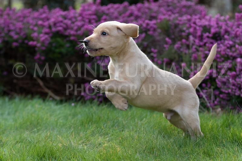 Weika Puppies 24 March 2019-6370.jpg