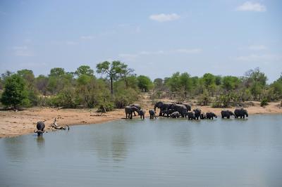 100615 - Kruger NP/Gomo Gomo Game Lodge