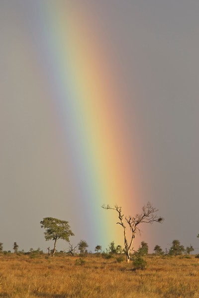 Rain Bow and dry tree 2.jpg
