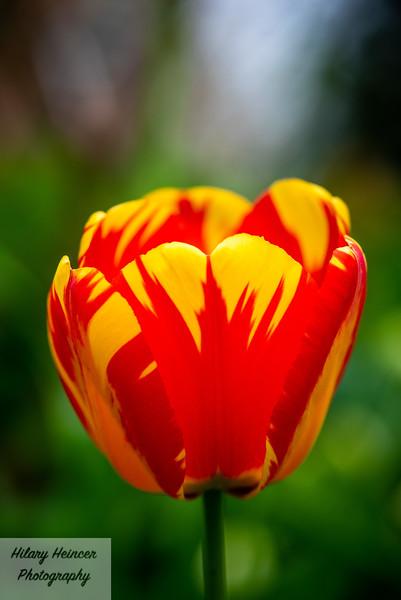 Flowers-9.jpg