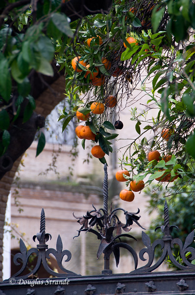 Thur 3/10 in Cordoba: Oranges at a gate