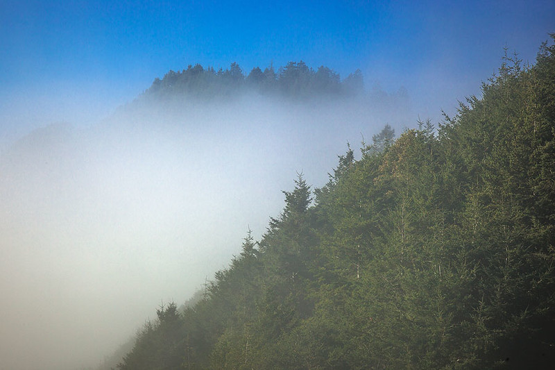 Lost_Coast_California_Fog_Pines_Peaks.jpg