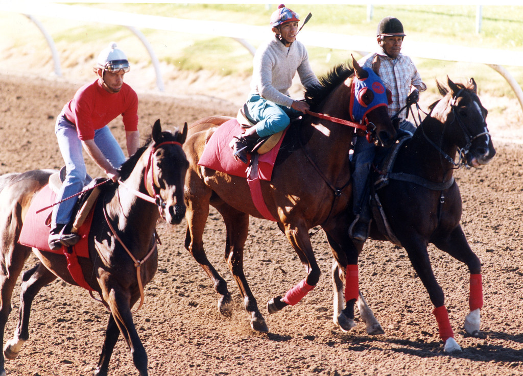 . Trainers put horses through their paces at Hollywood Park on November 26, 1993.   (Los Angeles Daily News file photo)