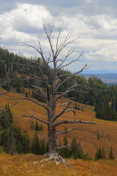 Yellowstone 112.JPG
