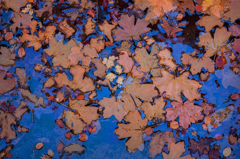 Zion_Autumn_Details_neon.jpg