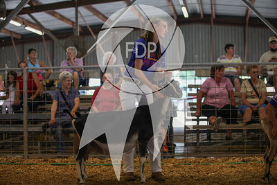 Junior Show Ring Shots