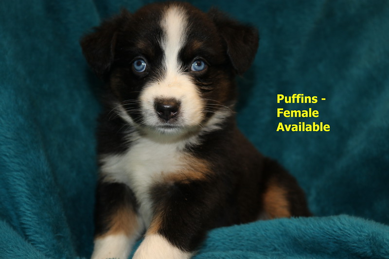 Puffins is reserved as of 11/15/19