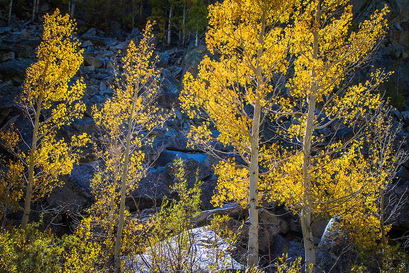 Bishop_Canyon_Fall_Color_Aspens_Eastern_Sierra_MG_3366.jpg