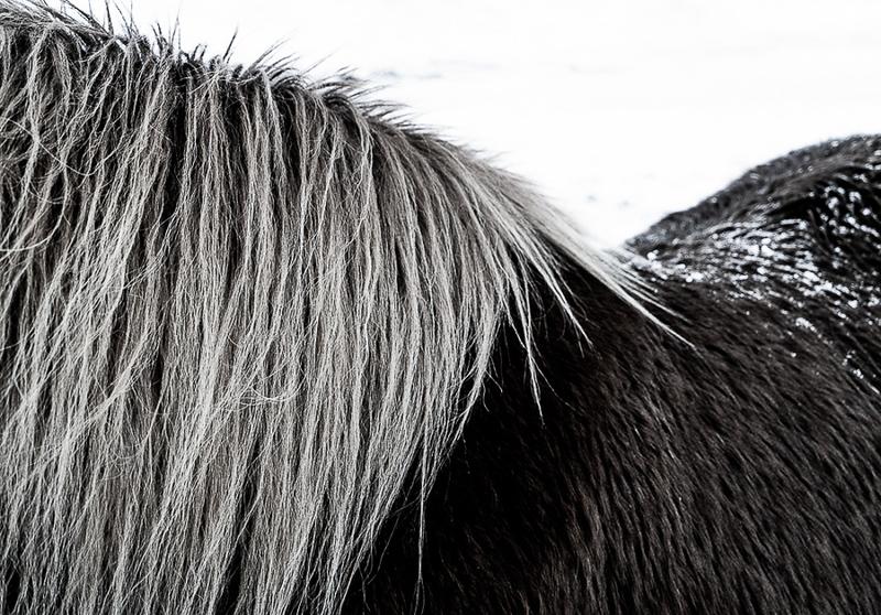 Iceland Beautys-8.jpg