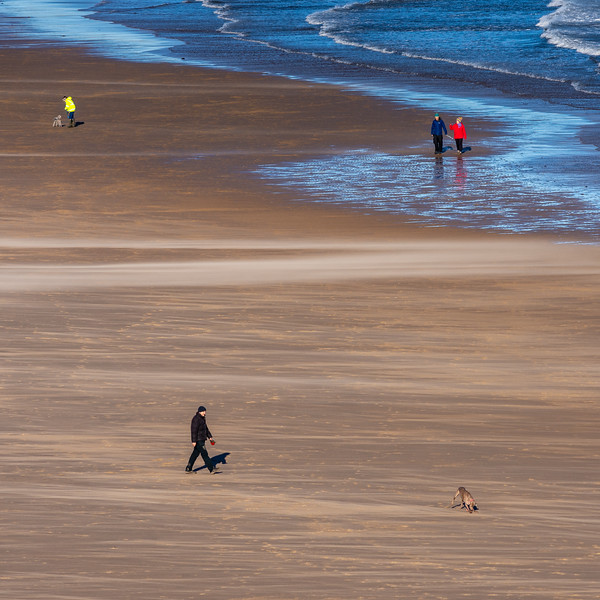 Dog walking on Tynemouth Longsands