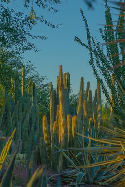 Desert Art  8