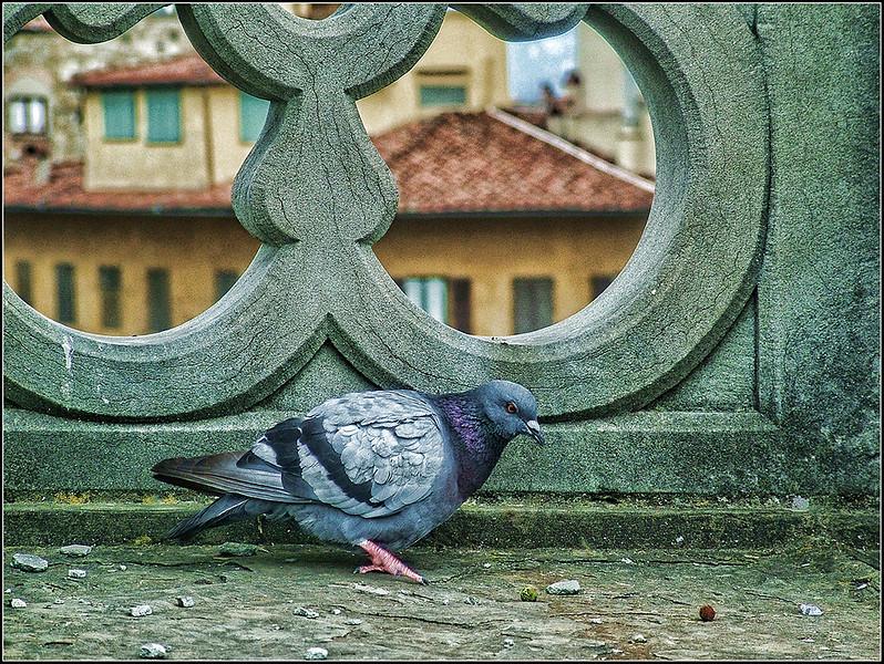 0408-Firenze-Uffizi-72.jpg