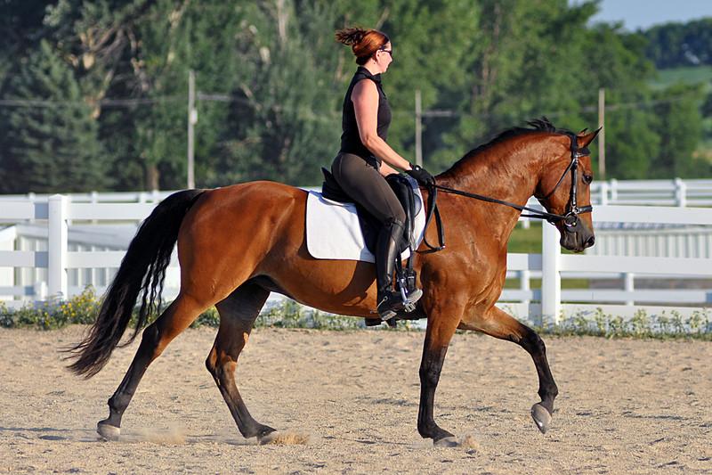 Horses July 2011 366a.jpg