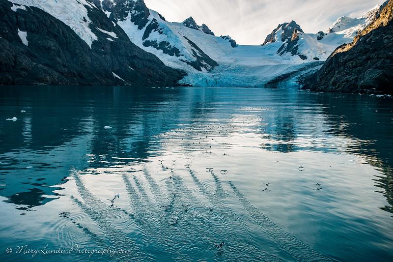 Antarctic-161