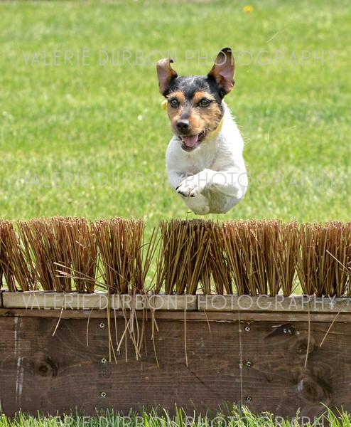 Valerie Durbon Photography Terrier final.jpg