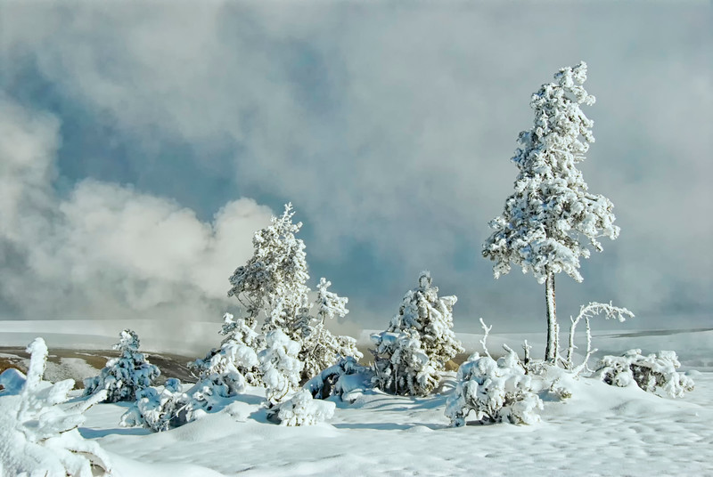 Trees_Frosted-6.jpg