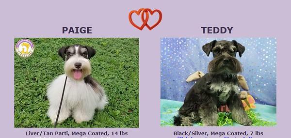 Paige & Teddy Puppies, DOB 1/20/2021