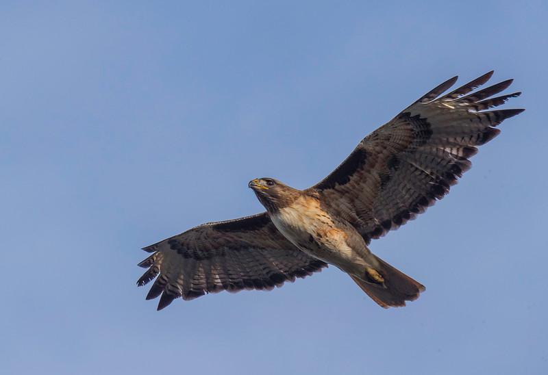 HNBH Birds1-37.jpg