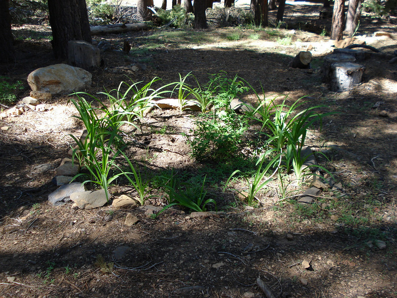Adriaan's Daylilies 06-12-08
