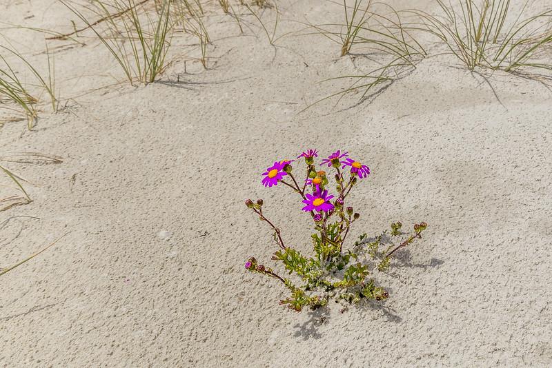 Einzelkämpfer im weissen Sand