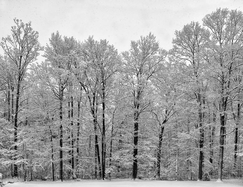 Winter Snow  #1900