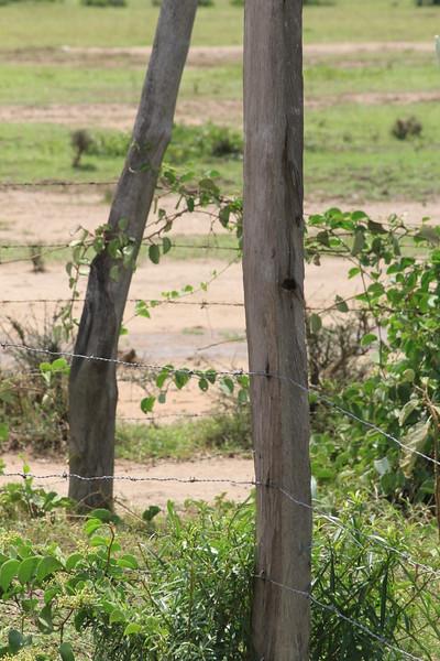 Kenya Part1 '15 1051.JPG