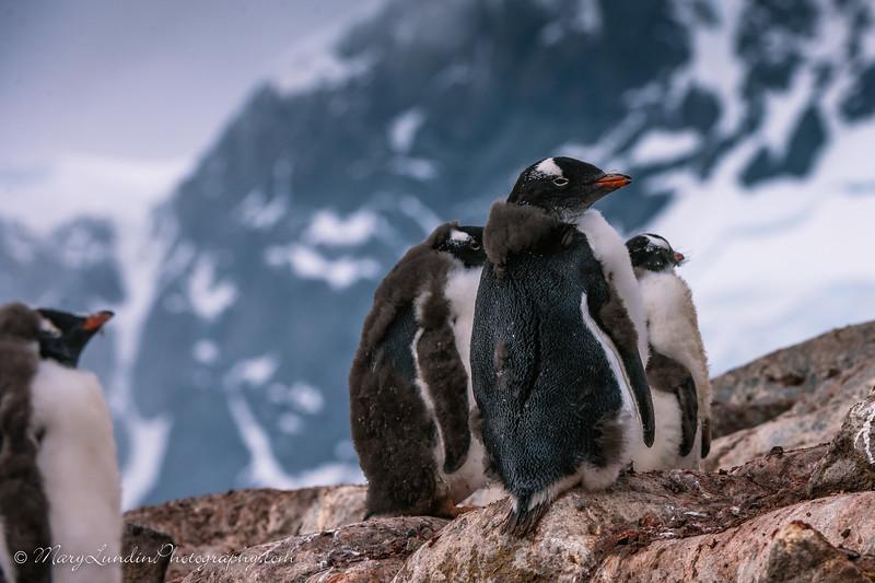 Antarctic-50