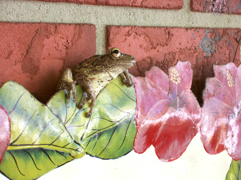 11_28_18 Welcome Frog.jpg