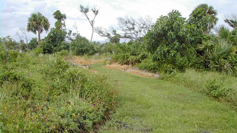 Restoration Trail vegetation